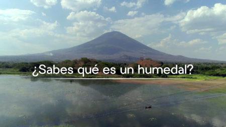Humedal Laguna El Jocotal – Biodiversidad